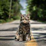Pet Sematary: la recensione