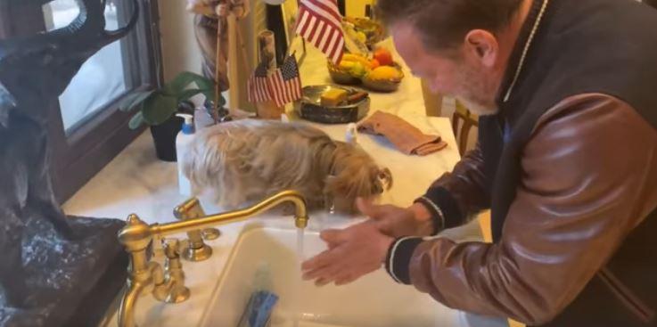 Arnold Schwarzenegger e il video con la sua cagnolina su come lavarsi le mani per il Coronavirus